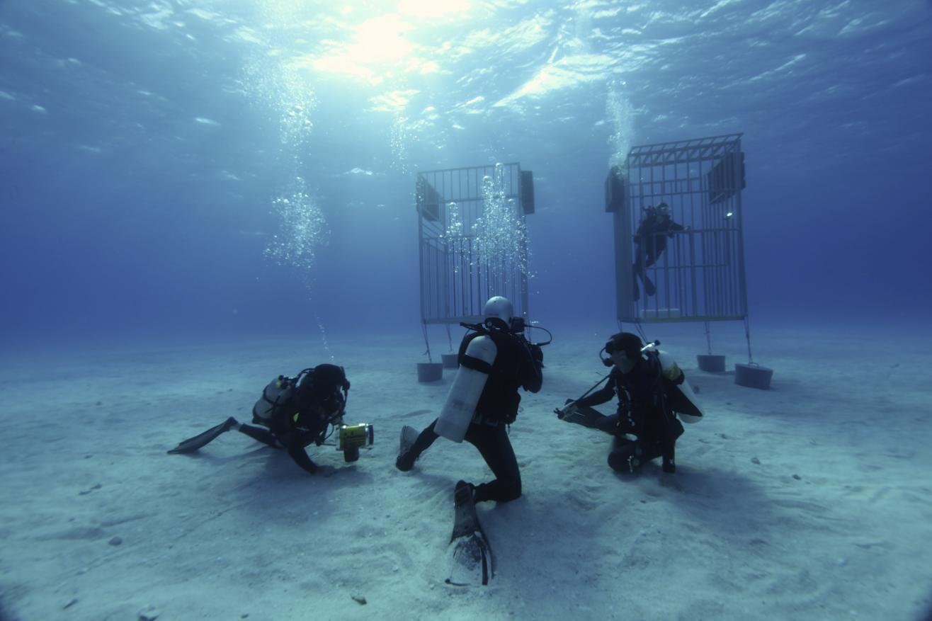 Diving And Scuba In Los Angeles
